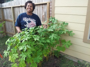 Chris did a great job growing okra.